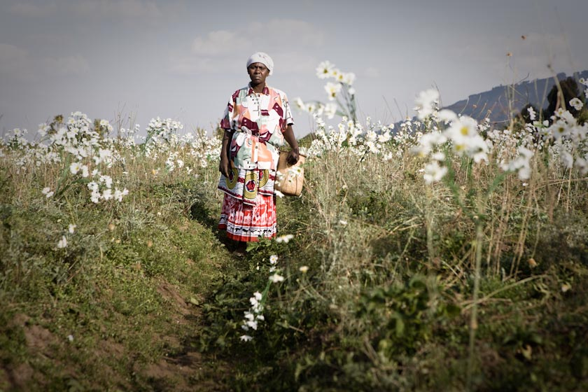 RWANDAN PYRETHRUM FARMER #1