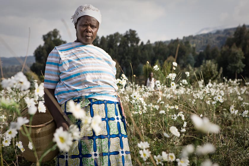 RWANDAN PYRETHRUM FARMER #2